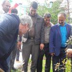 اقدام ماندگار مخابرات کهگیلویه وبویراحمد/کاشت ۴۰ نهال در پارک مرکزی شهر دهدشت