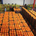 توزیع میوه شب عید با نرخ مصوب از ۲۵ اسفند  در کهگیلویه و بویراحمد آغاز می شود