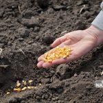 تولید هشت رقم بذر جدید در پردیس تحقیقات کشاورزی امامزاده جعفر گچساران
