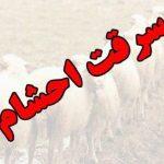 دستگیری سارقان احشام با اعتراف به ۹۶راس دام در گچساران